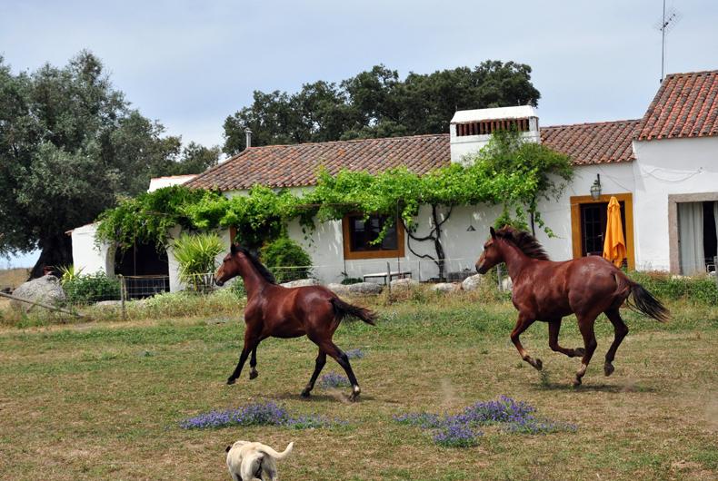 Paarden voor ervaren ruiters